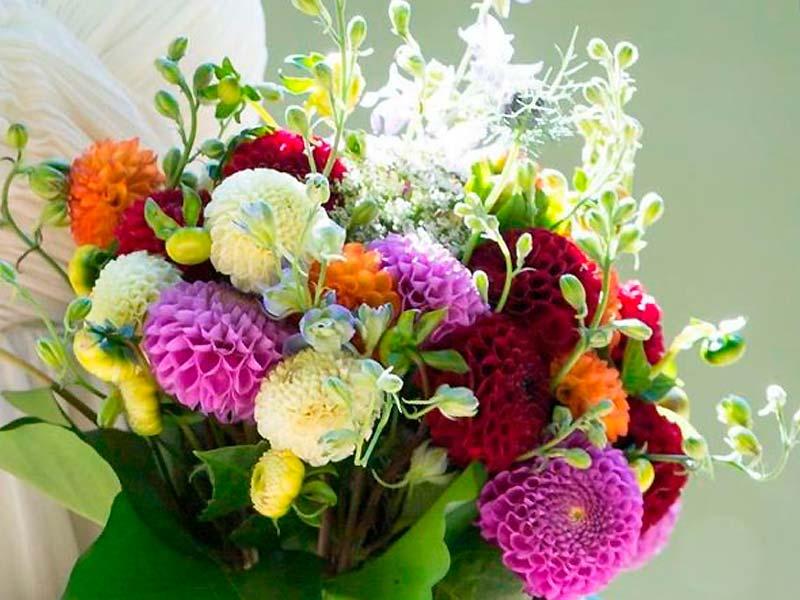 Brudebuket bundet af georginer i blandede farver.