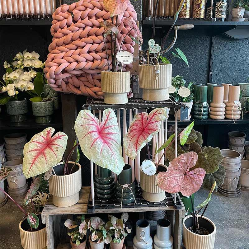 Planter, brugskunst og potter i Masielas Blomster