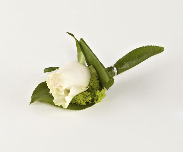 Knaphulsblomst, almindelig rose
