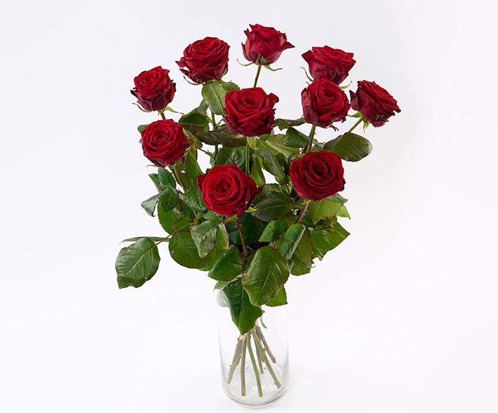 Langstilket røde roser