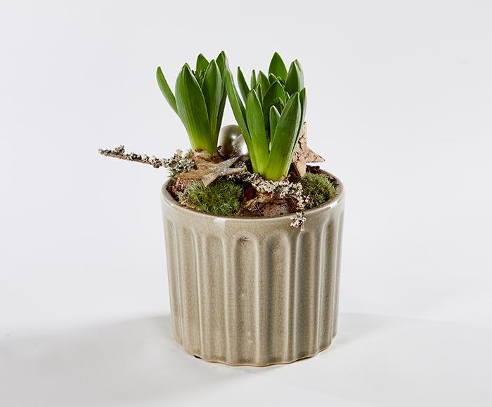 Dekoration af hyacinter