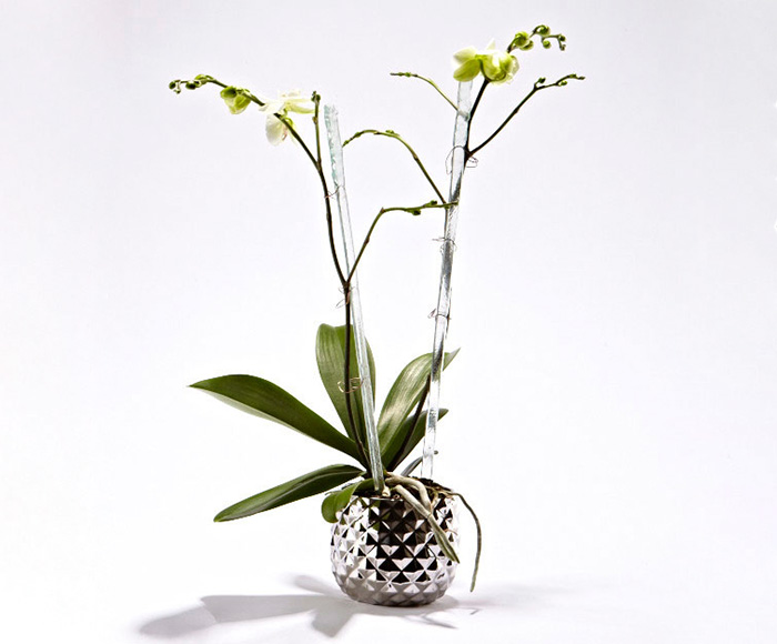 Image of   Hvid orkide i skjuler