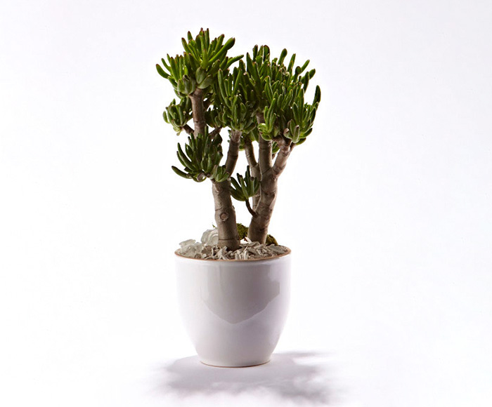 Image of   Grøn plante i skjuler
