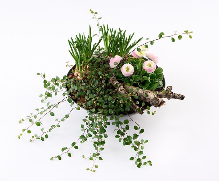 Image of   Forårsbeplantning