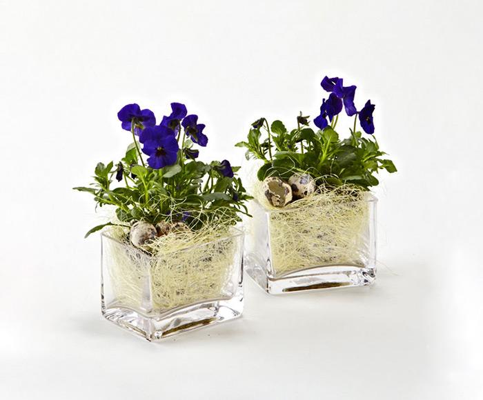 Image of   Forårsblomster i glas