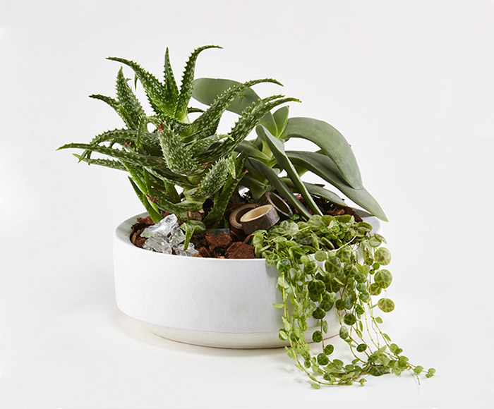 Grønt plantearrangement