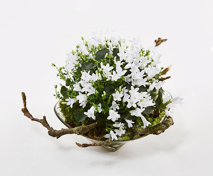 Plantedekoration