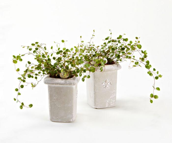Piblende grønne planter