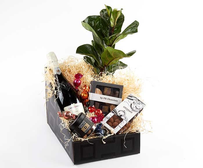 Image of   Festlig gavekasse med plante