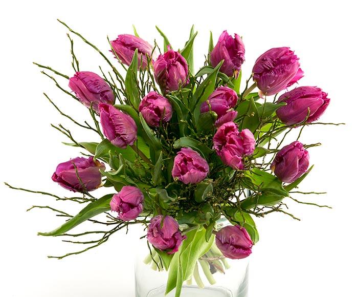 Frisk buket lilla tulipaner