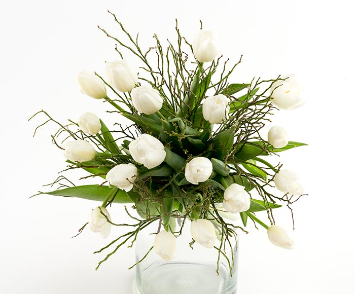 Image of   En buket med hvide tulipaner bundet med smukt grønt!