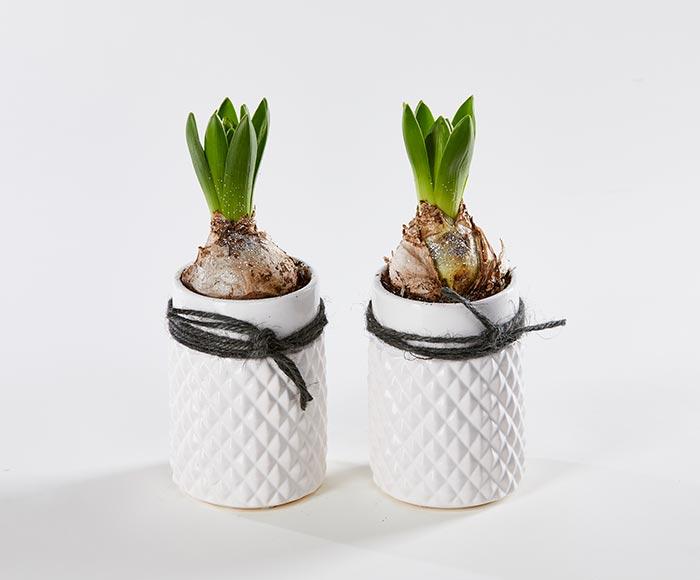 Fine hyacinter