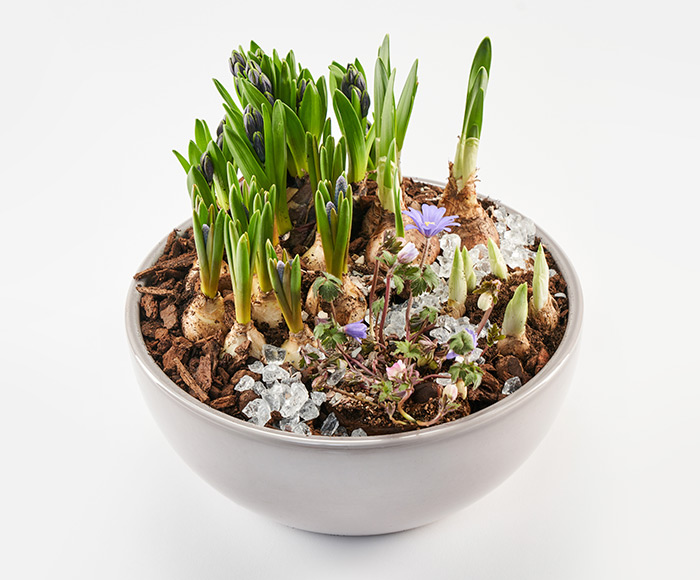 Forårsdekoration, floristens valg