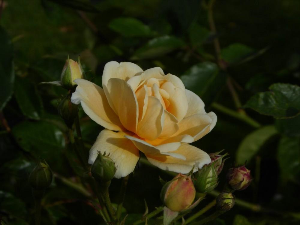 flot blomst